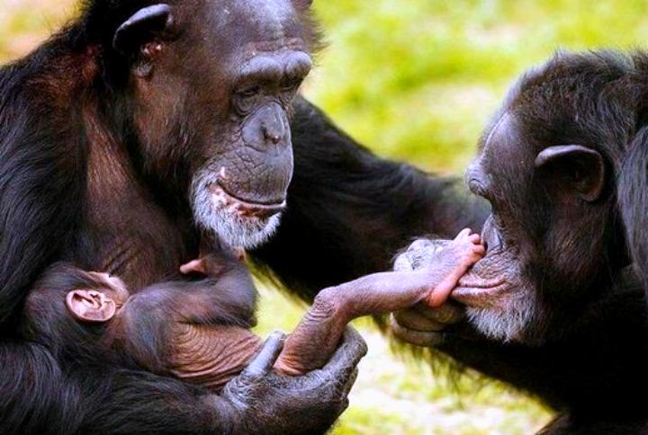 Resultado de imagem para animais sencientes