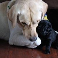 Dicas para criar cachorro grande em apartamento. É possível?!