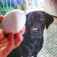 Alimentação Natural: Saiba porque o ovo não pode faltar na dieta do seu peludo